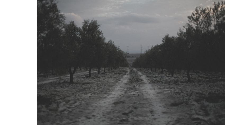 _MG_6097